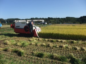 稲刈り作業①
